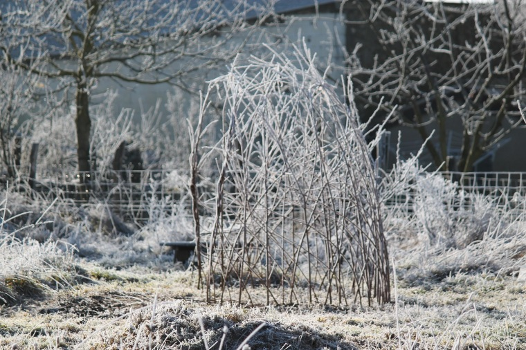 A willow structure in the meadow