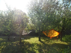 Hammocks in the orchard